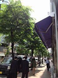 namiki_street.jpg