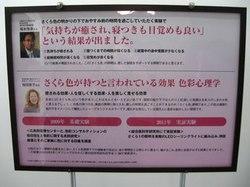 sakura_8.jpg