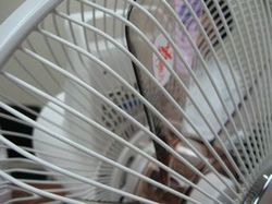 sharp_fan_4.jpg